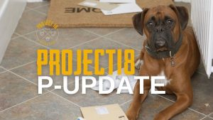 project18 update blog post cover with a boxer dog and mail on the floor