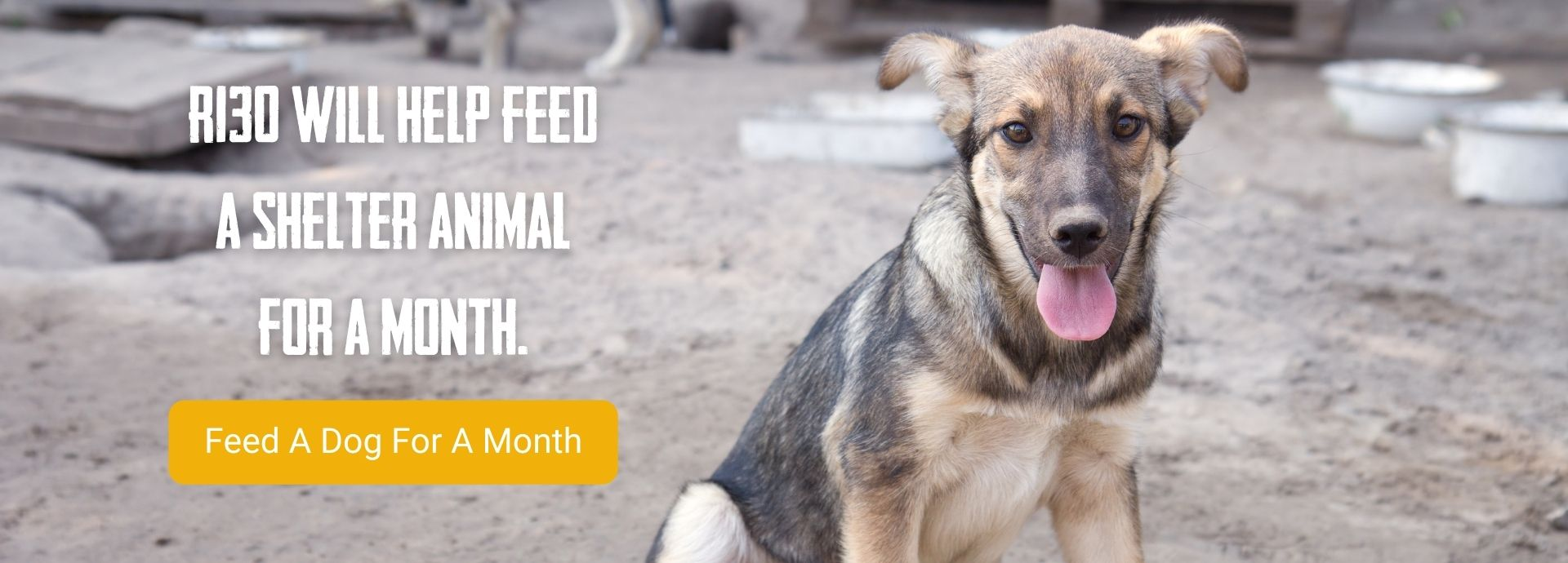 Donate Today Project18 Feed a Dog Banner 2