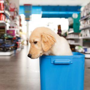 puppy in a blue bin in pet store