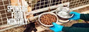 shelter dogs being fed kibble and water