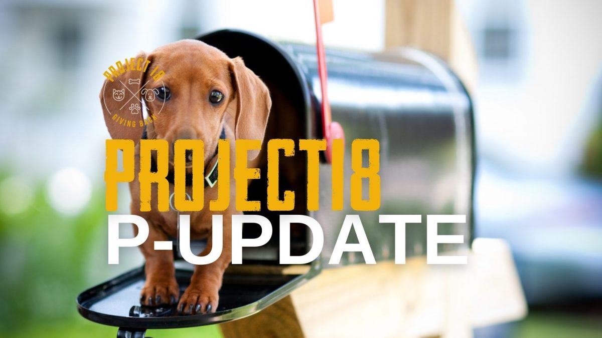 project18 update blog cover image with a puppy in a mailbox